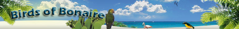 Birds of Aruba