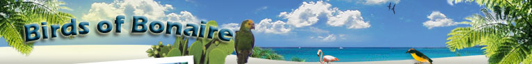 Birds of Bonaire